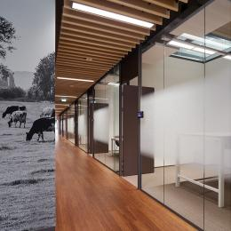 Corridor / office dividing partitions wall